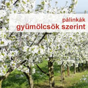 Pálinkák gyümölcsök szerint a palinka.online webshopban
